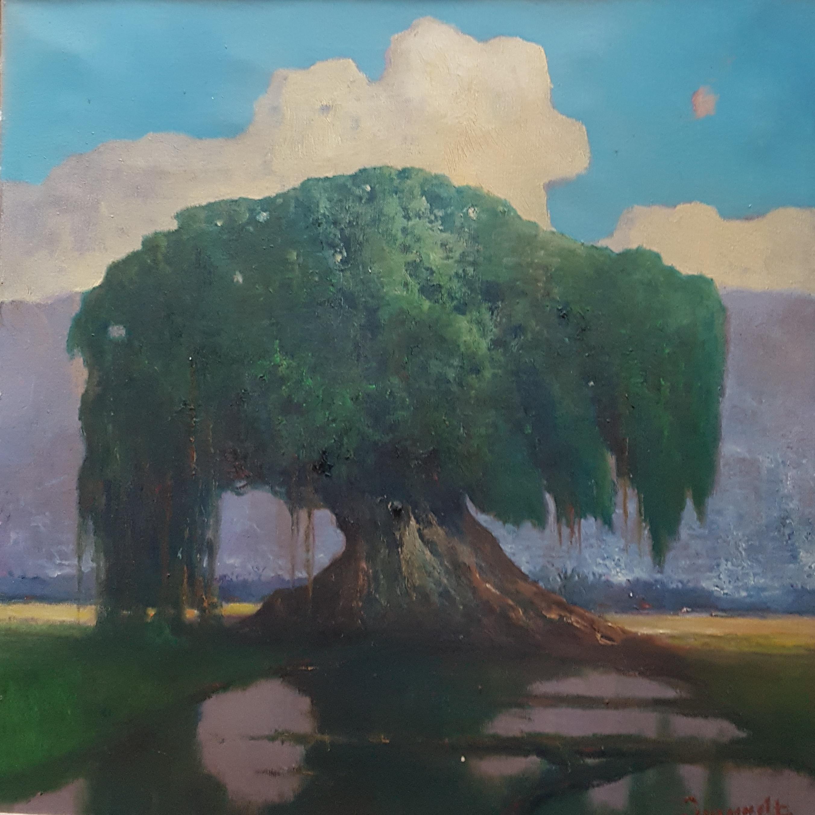 Waringin boom / Banyan tree