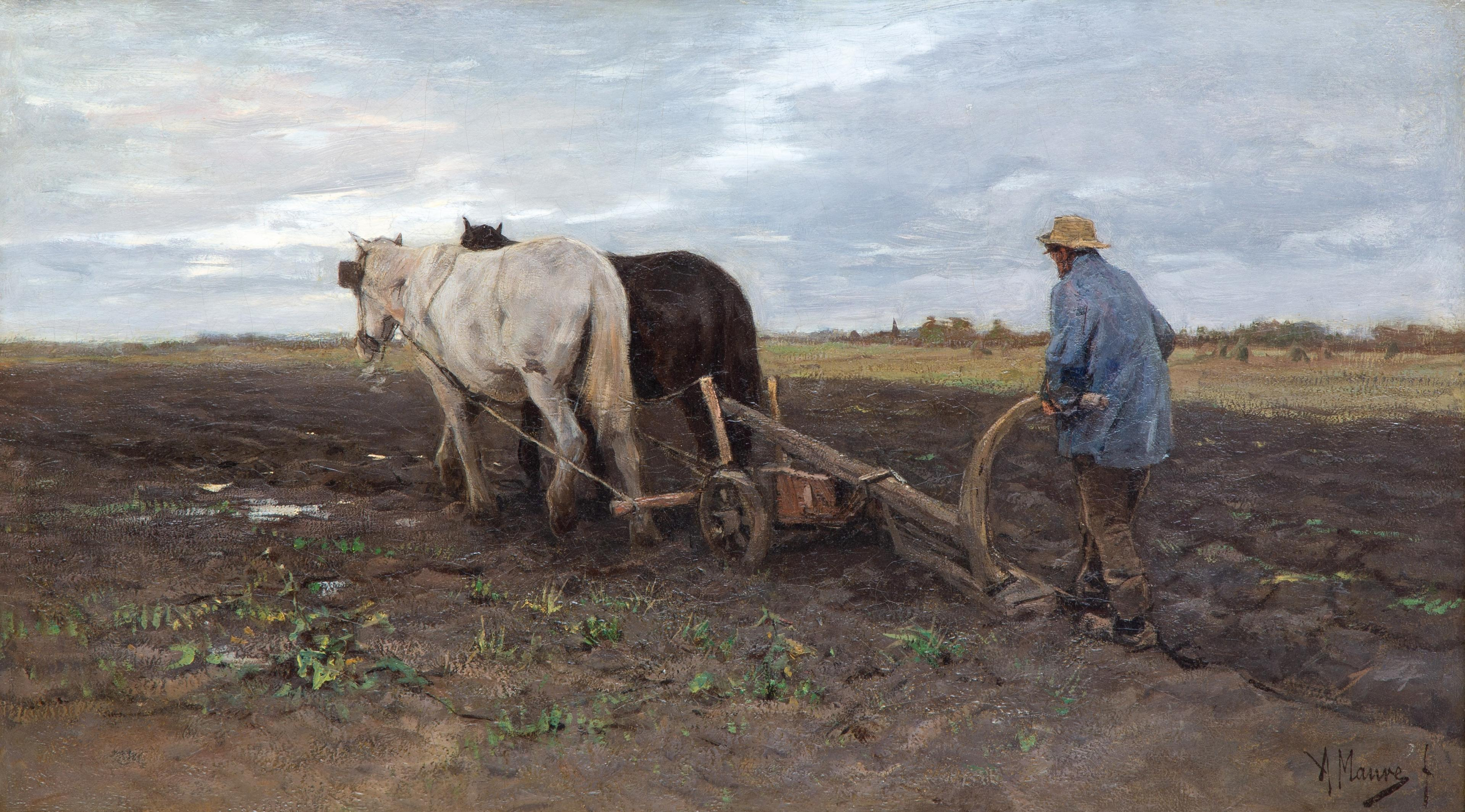 Ploughing horses on the field