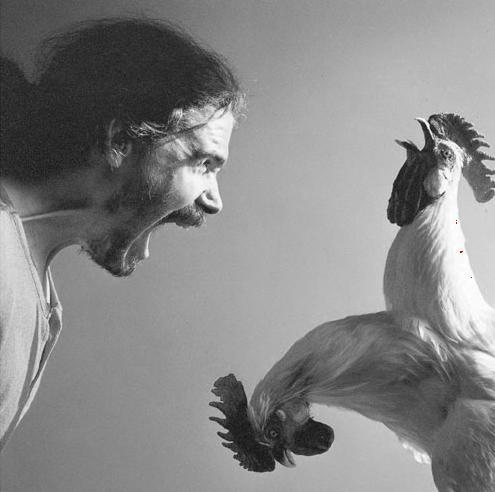 Gevraagd kippen van Koen Vanmechelen