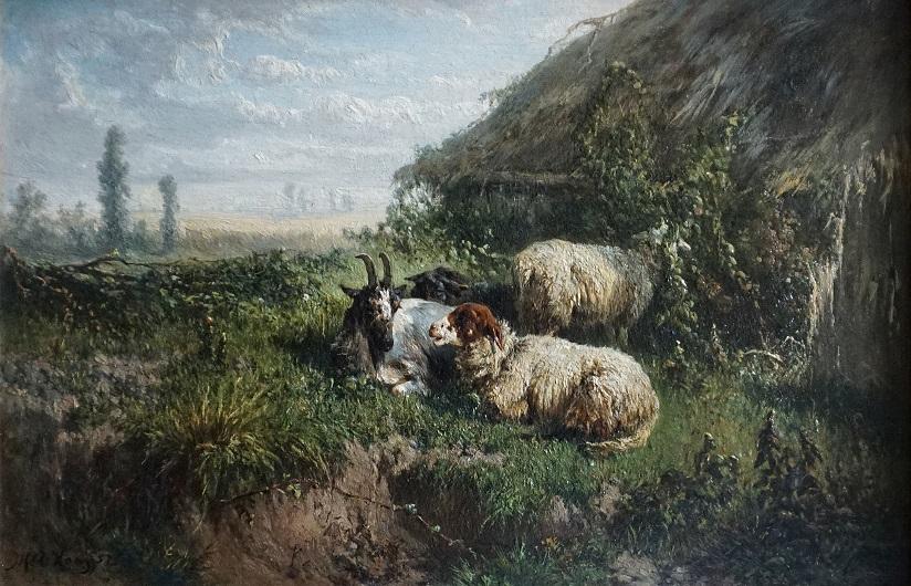 Rustende schapen in landschap